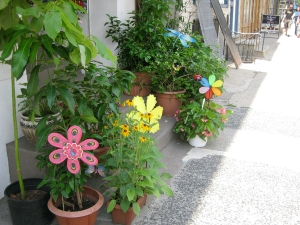 Plants and pinwheels